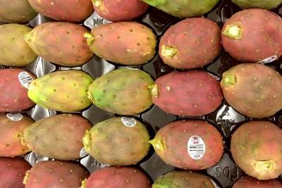 Cactus Pears