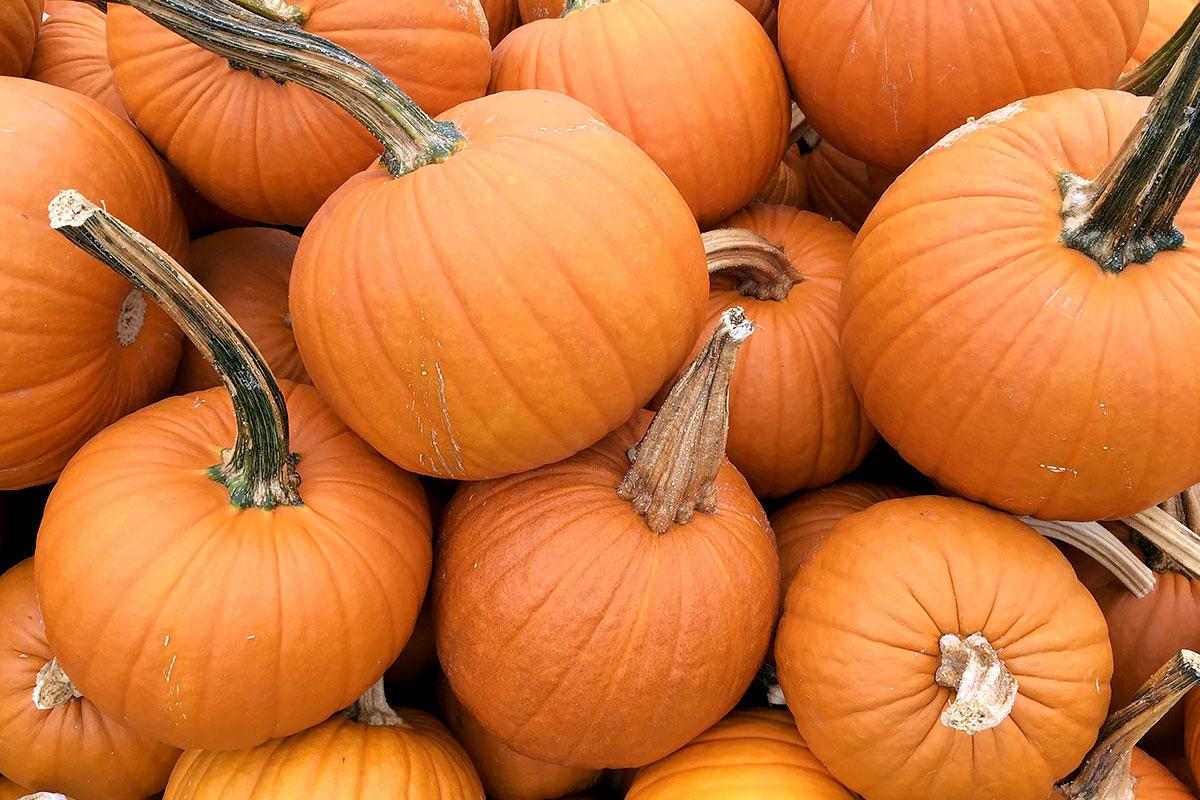 how to cut a pie pumpkin