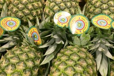 Organic Gold Pineapples