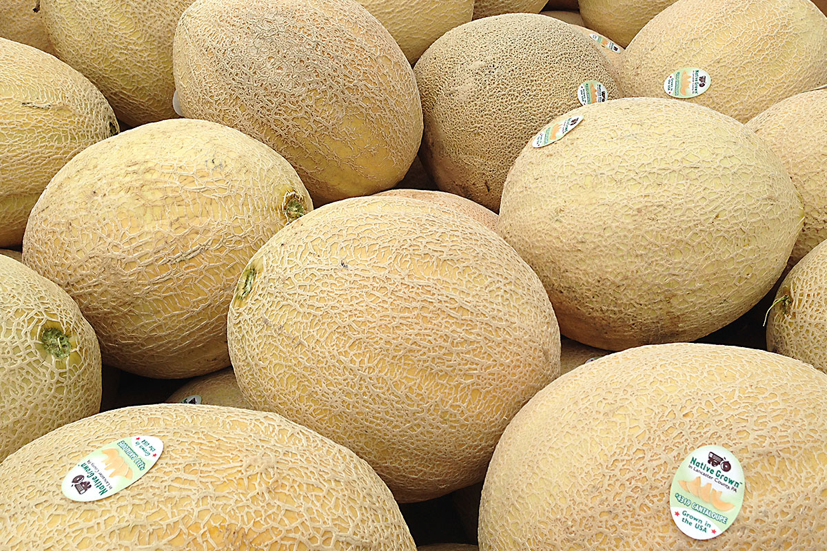 All Melons - Athena Melon - Territorial Seed