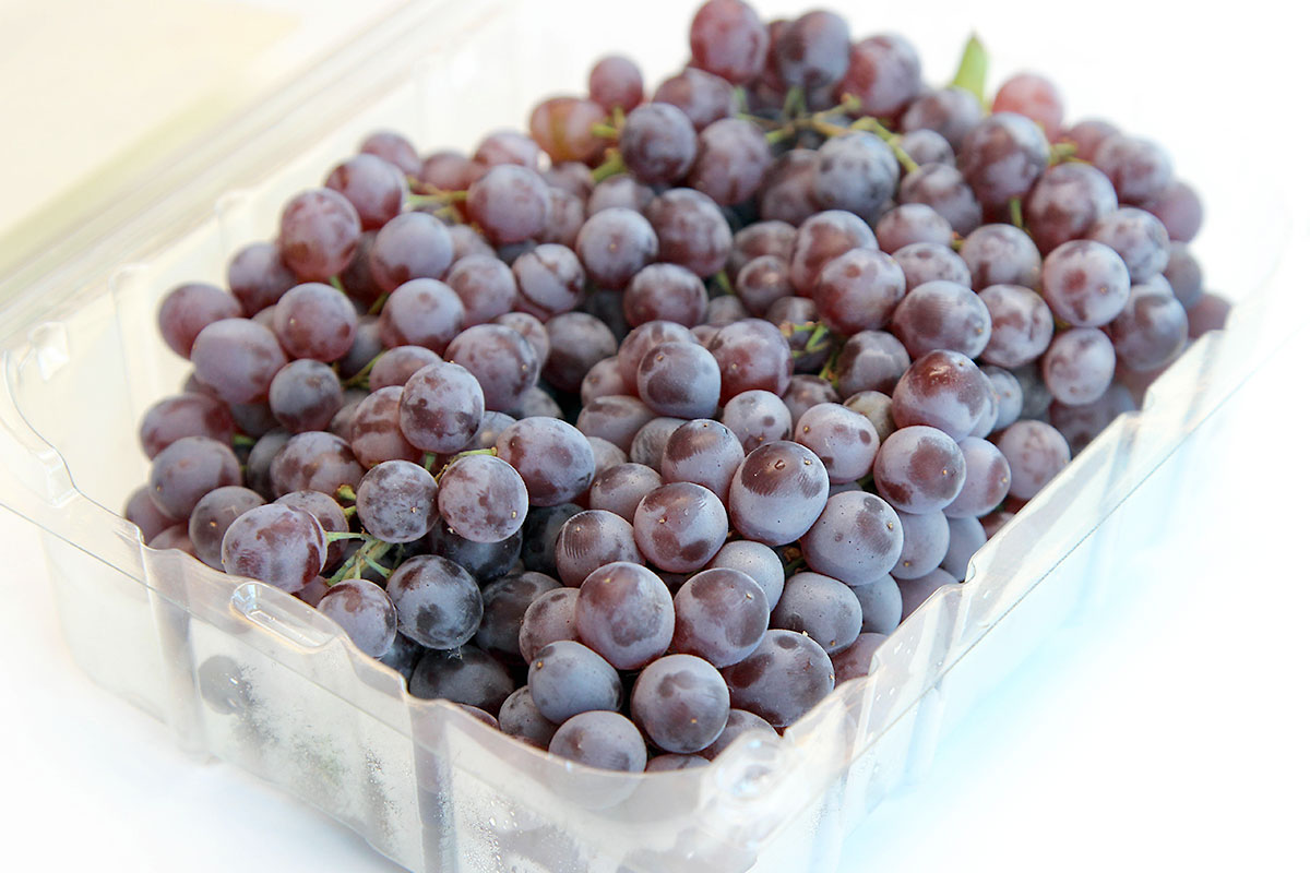 Organic Champagne Grapes