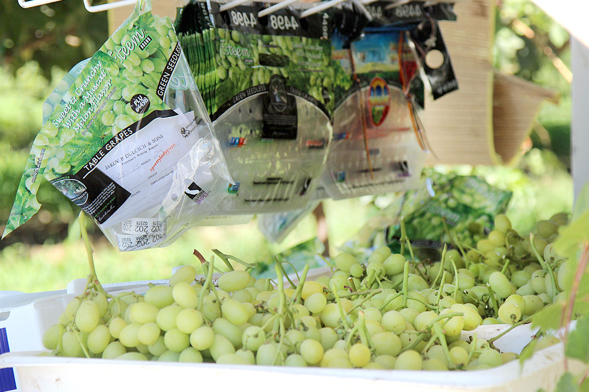 Green Seedless Grapes